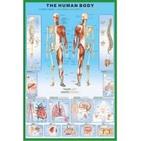 Harta corpului uman